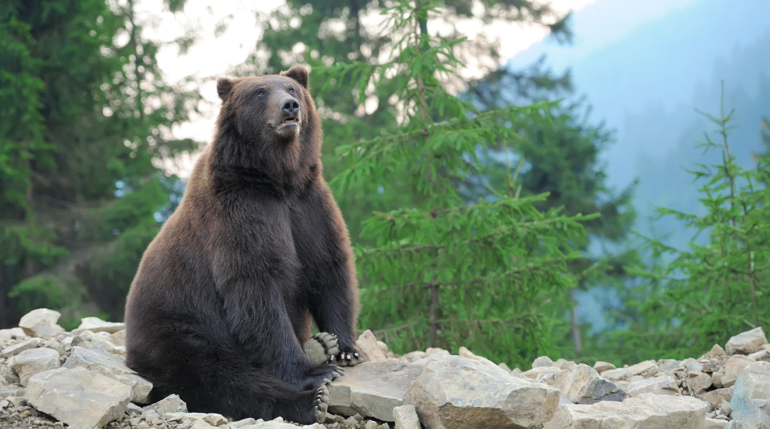 על ממלכת הדובים הפרסית – מגילת אסתר – חלק א