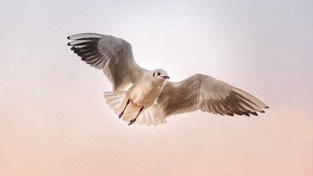 כל עוף נשרף: שיעור מרתק מפי הרב שרקי לכבוד הילולת התנא רבי יונתן בן עוזיאל