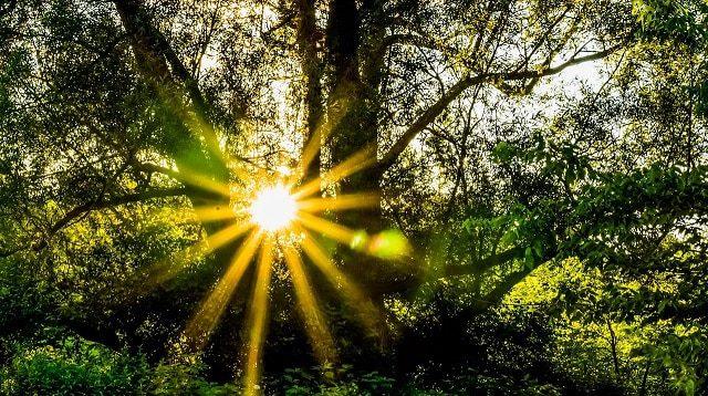 ספירה של תקווה: המוטיביציה שמחדירה בנו ספירת העומר