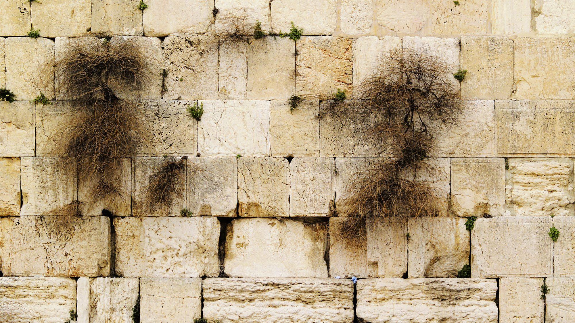 חינוך לאבלות על חורבן המקדש בדור של גאולה – הרב אלישע אבינר