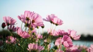 הסוד של פרשת תרומה : היופי זה כן הכל בחיים